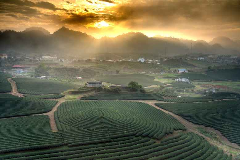 photo of rice field beside during golden hour